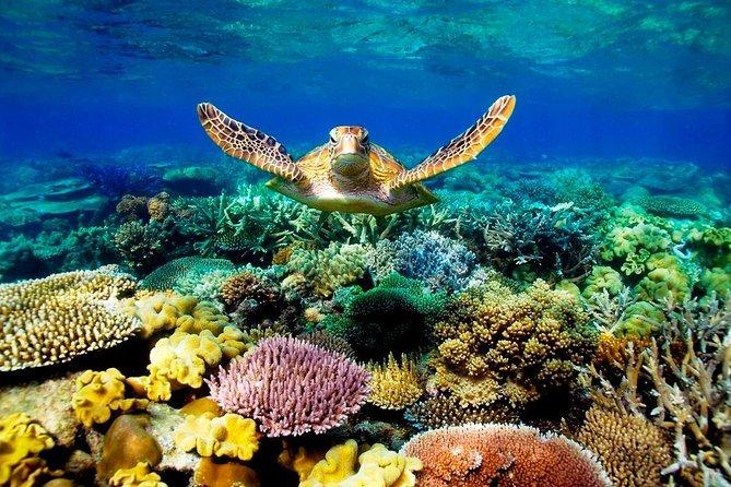 Creme solari e barriere coralline
